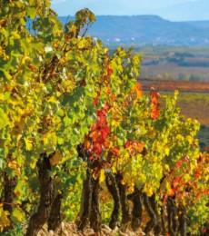 Innovación y sostenibilidad en el sector vitivinícola para cuidar el medio ambiente